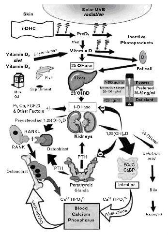 Similar a explique la funcion del atp en el metabolismo celular